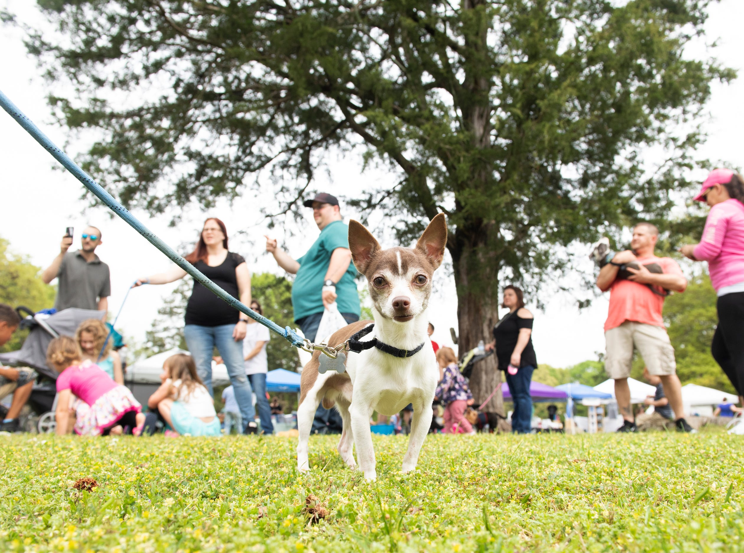 Dogs and owners, including Oreo (center), attend Paws for a Cause at Simpsonville City Park Saturday, April 13, 2019.