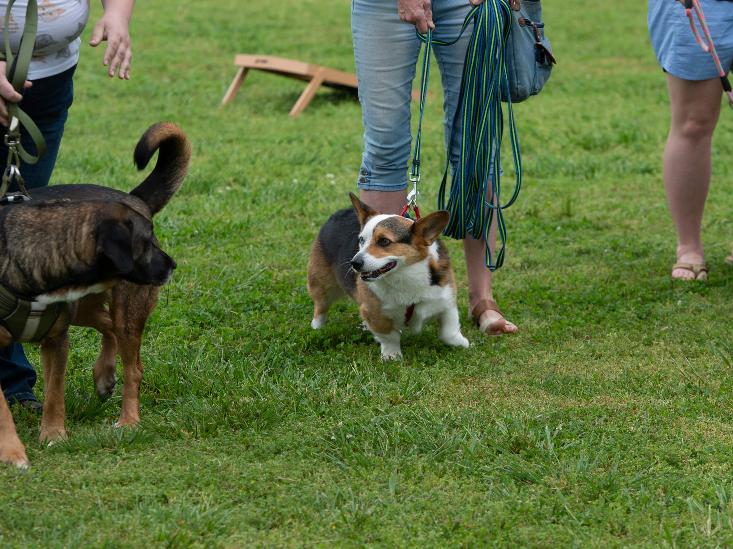 Dogs compete in the cutest dog category during Paws for a Cause held in Simpsonville City Park Saturday, April 13, 2019.