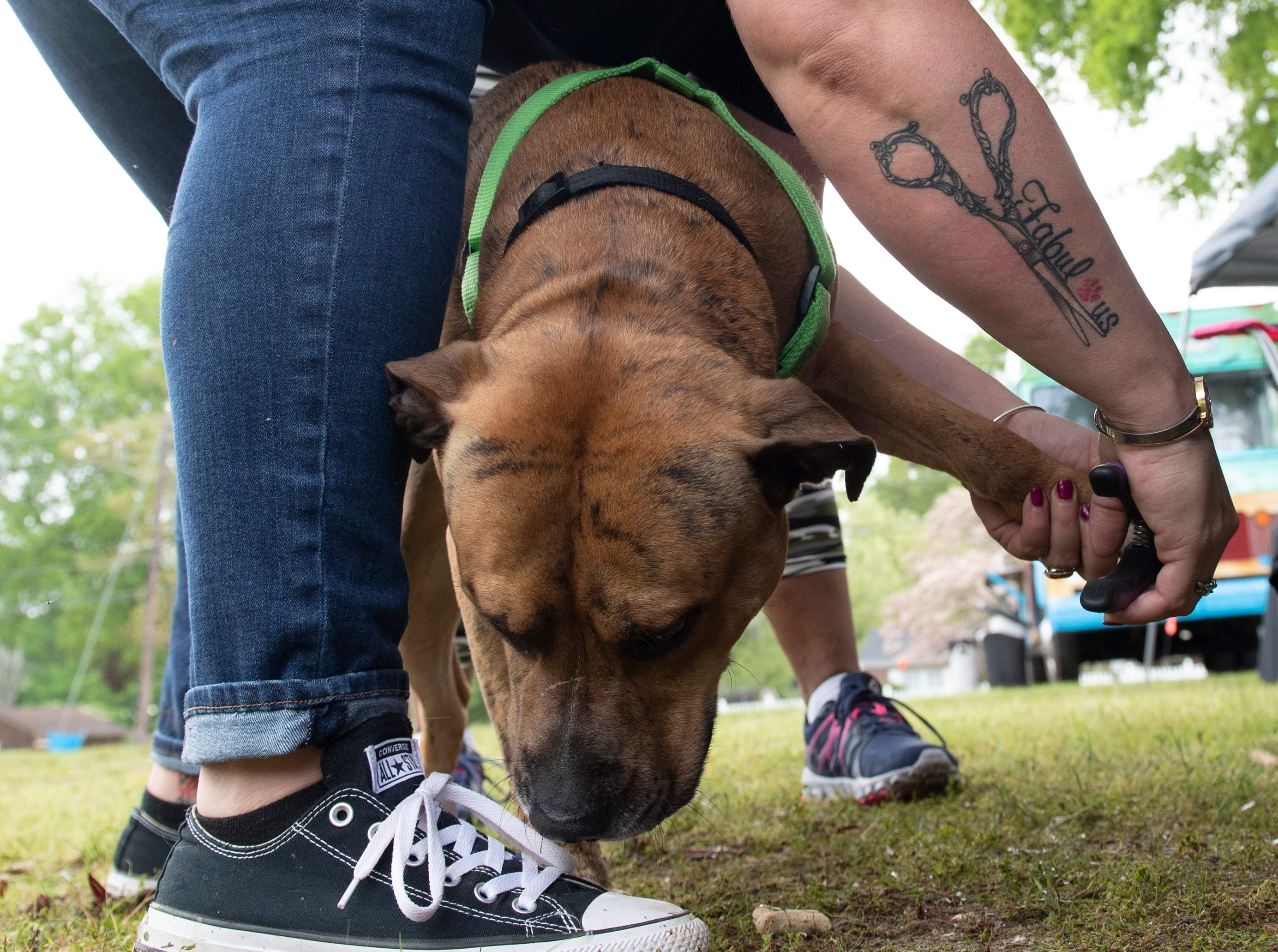 Tessa Hubbard, of Foo Foo Fabulous, clips Denver's nails, during the Paws for a Cause event at Simpsonville City Park Saturday, April 13, 2019. Denver was accompanied by owner Tammy Briggs of Simpsonville,