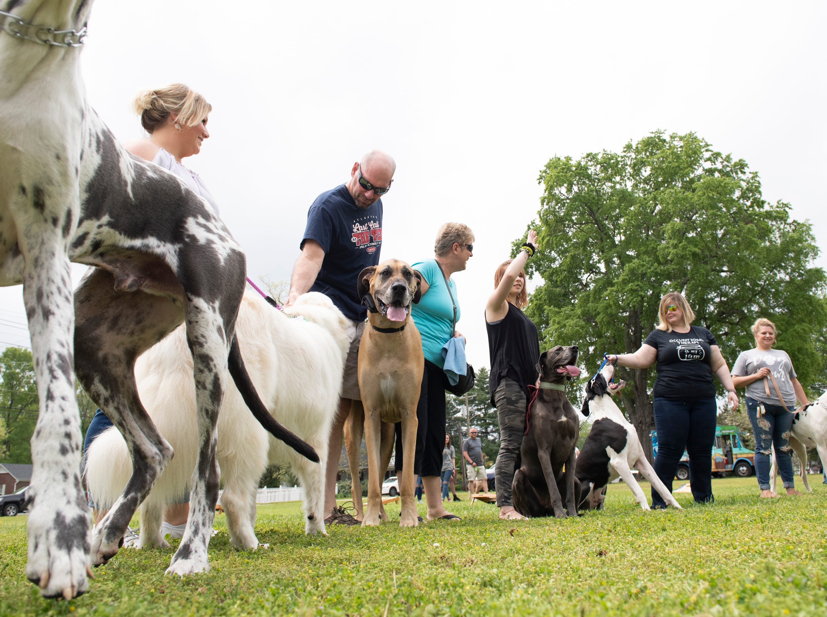 Dogs compete in the largest dog category during Paws for a Cause in Simpsonville City Park Saturday, April 13, 2019.