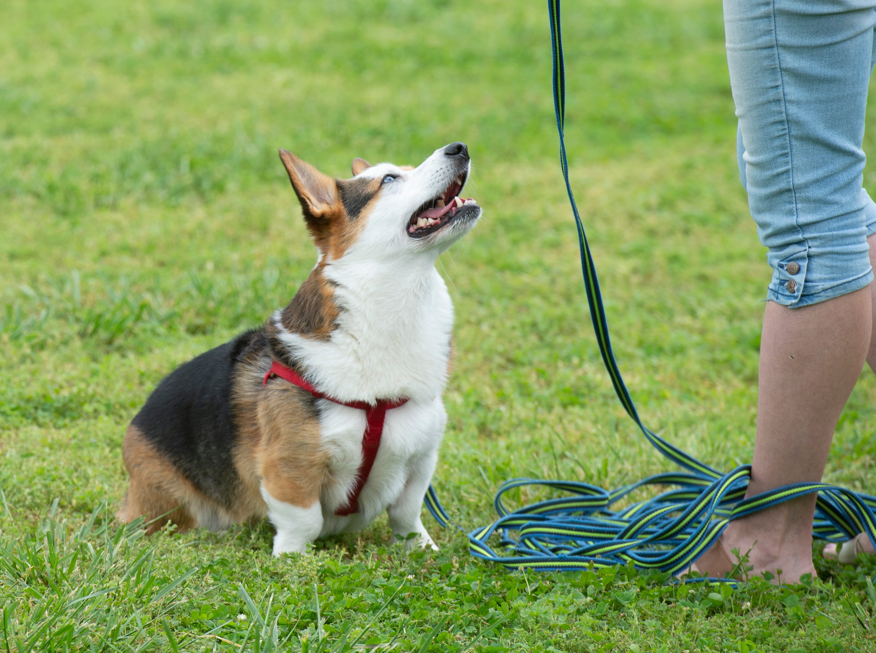 Dogs and owners attend Paws for a Cause at Simpsonville City Park Saturday, April 13, 2019.