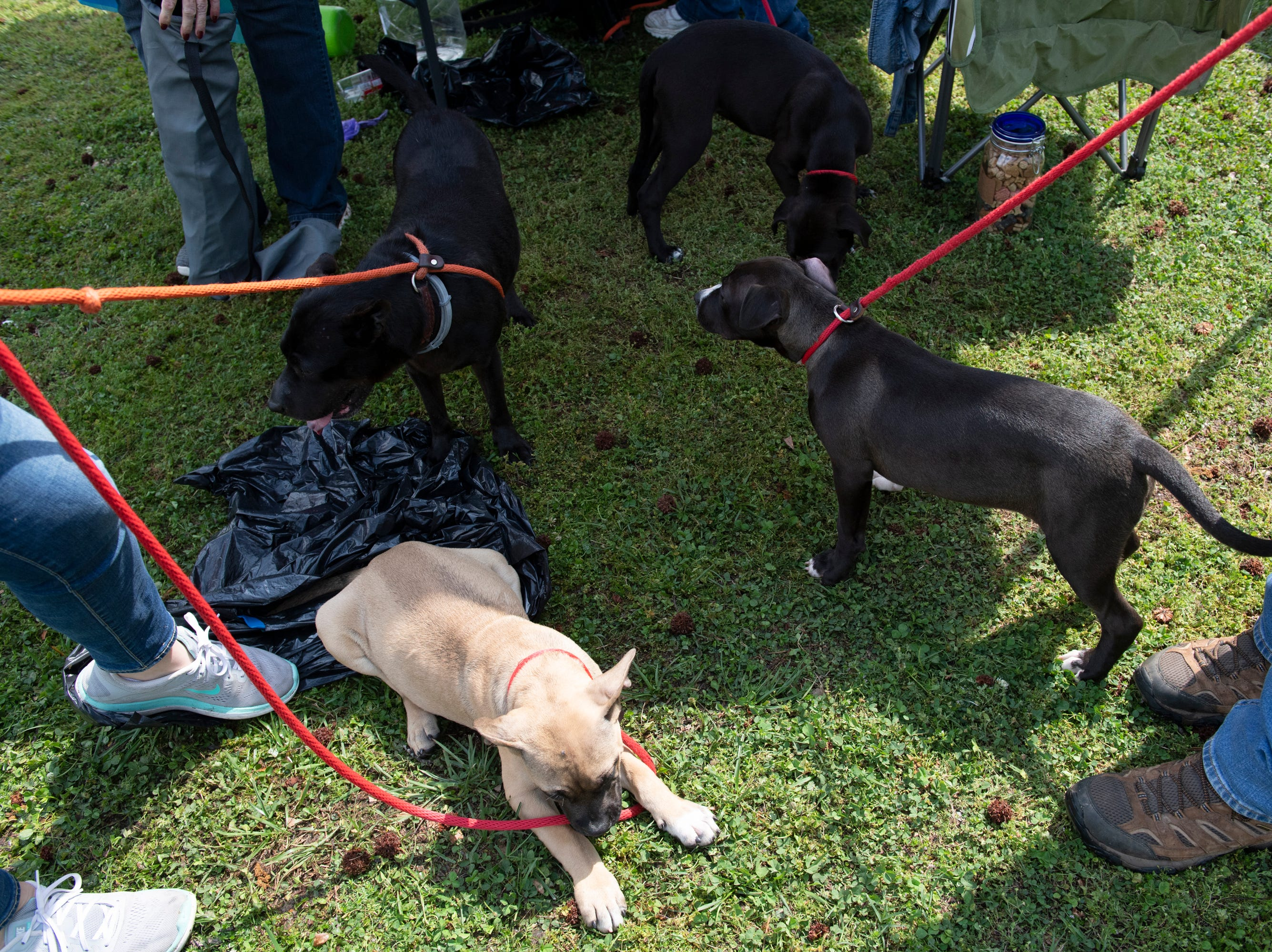 Concerned Citizens for Animals (CCA) shows dogs available for adoption at the Paws for a Cause event in Simpsonville City Park Saturday, April 13, 2019. The event was a fundraiser for CCA.
