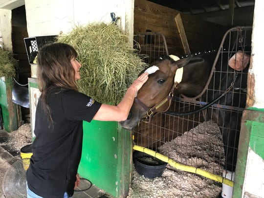 Horse trainer Kathleen O'Connell pets Well Defined at his stall in her barn at Tampa Bay Downs.