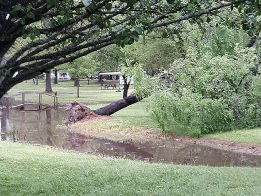 A tree toppled in the park at Oak Grove during an early morning round of severe weather in West Carroll Parish.