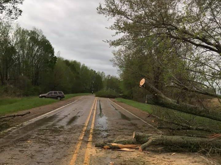 Trees fell over U.S. 425 in the Oak Ridge/Collinston area of Morehouse Parish Saturday morning.