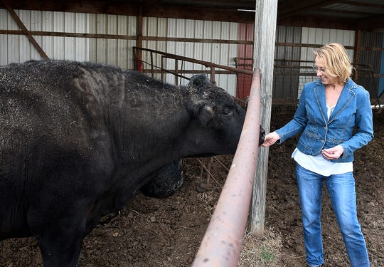 FILE - In this March 19, 2019 photo, Linda Woodruff hand feeds a wagyu bull during an interview at Silverwood Ranch southeast of Enid, Okla.