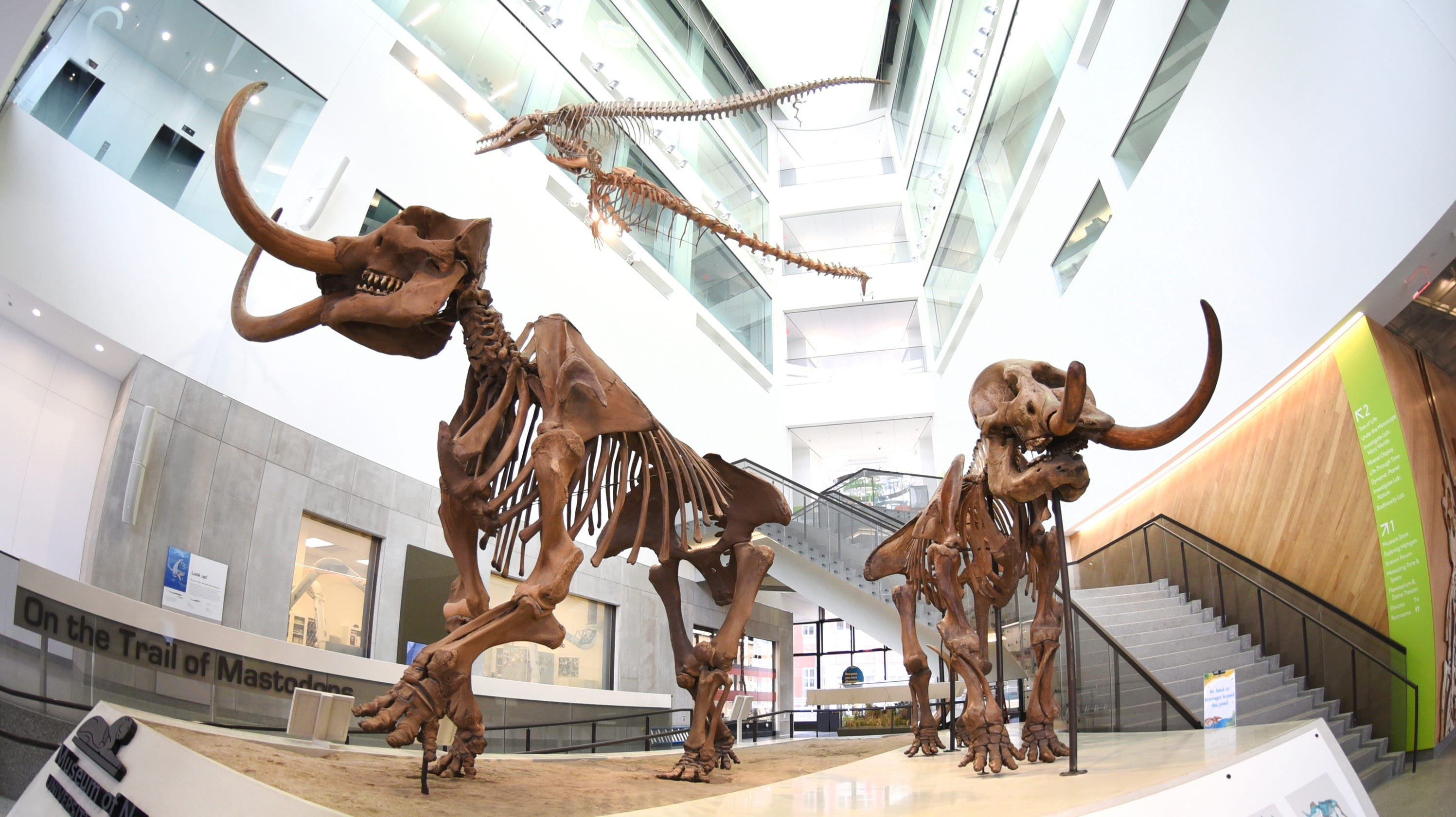 QnA VBage University of Michigan natural history museum reopening to public