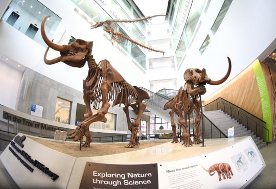Two mastodon skeletons greet visitors at the entrance to the University of Michigan's Natural History Museum on April, 11, 2019 in Ann Arbor.