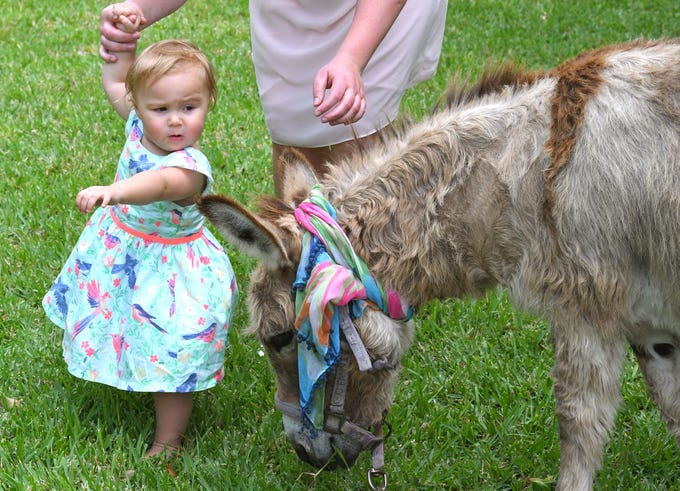 16 month old Hazel Grogan meets Jeannie the donkey. Eastminster Presbyterian Church held a free Palm Sunday Funday following a traditional morning service. Activities included several animals from Cox Farms, Jazz music by the Ron Teixeira Trio, crafts, food, egg hunts, and  more. This Indialantic church, which is over 75 years old, will hold several series on Easter Sunday.