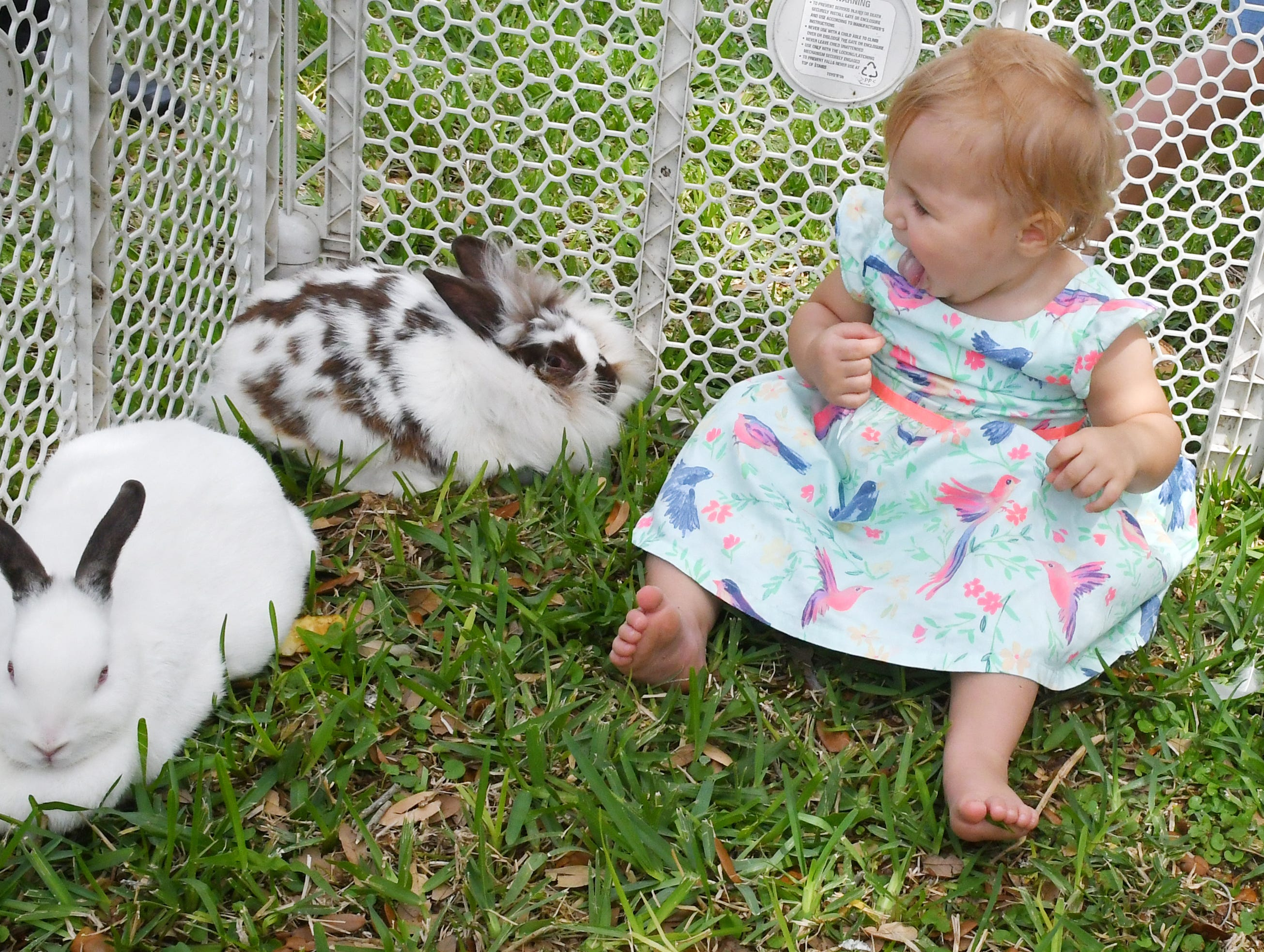 16 month old Hazel Grogan meets some bunnies. Eastminster Presbyterian Church held a free Palm Sunday Funday following a traditional morning service. Activities included several animals from Cox Farms, Jazz music by the Ron Teixeira Trio, crafts, food, egg hunts, and  more. This Indialantic church, which is over 75 years old, will hold several series on Easter Sunday.