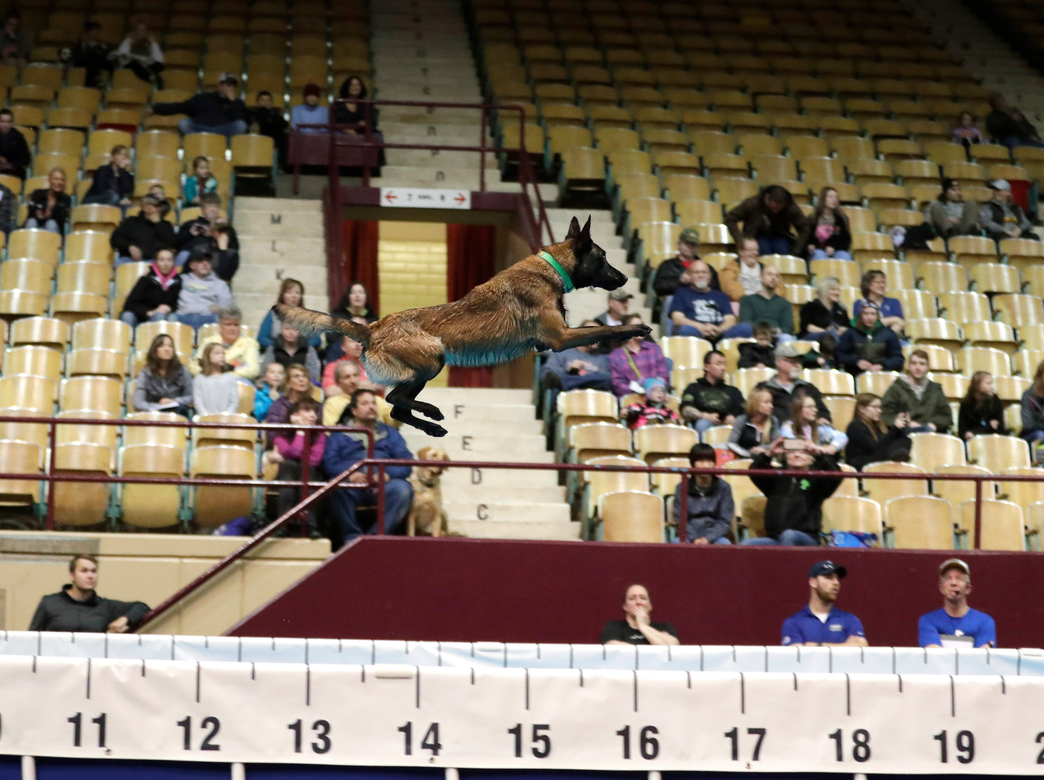 A dog participates in distance-jumping competition on April 13, 2019 at the WBAY Pet Expo held at the Brown County Veterans Memorial Arena and Shopko Hall in Ashwaubenon, Wis. The three-day expo is the last event to be held at the arena before it is demolished.