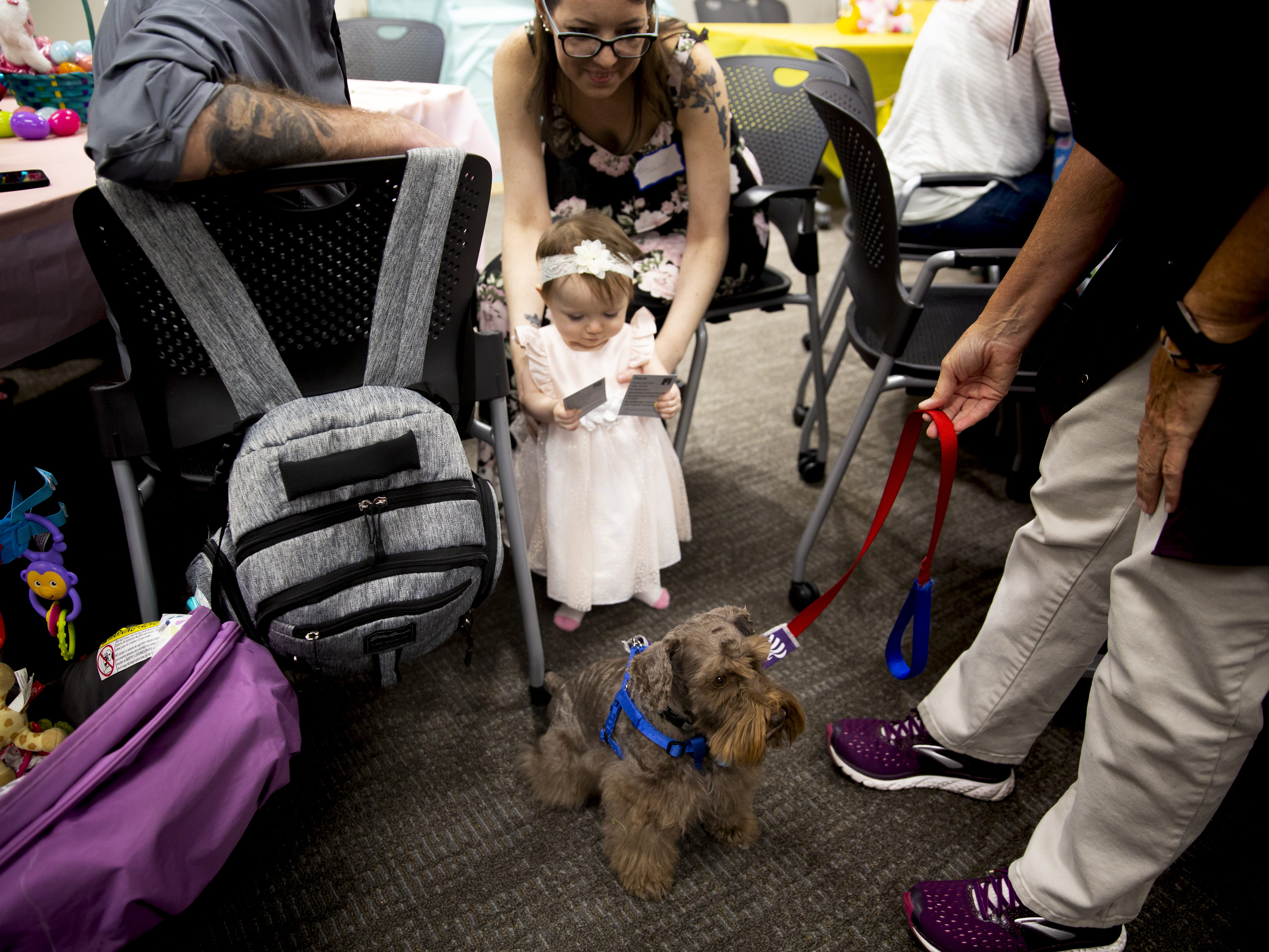 Olivia Pardue, 30 months, holds the therapy dogs' business cards at the Preemie NICU Reunion at Banner University Medical Center on April 13, 2019.