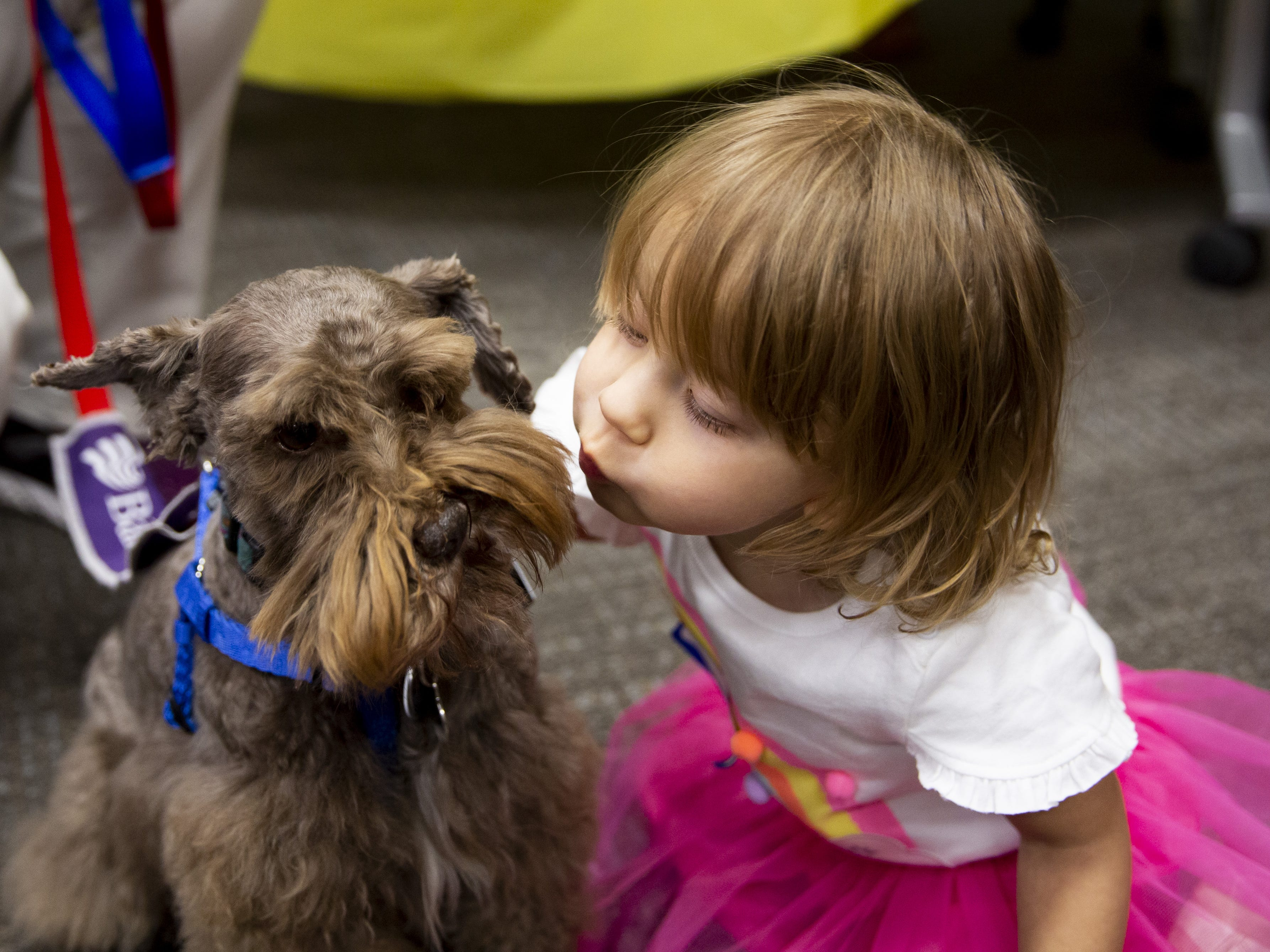 Kaydance Grimes, 2, gives Charlie the therapy dog a kiss during the Preemie NICU Reunion at Banner University Medical Center on April 13, 2019.