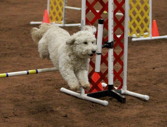 Dogs and their handlers competed Saturday, April 13, 2019, during the Obedience Training Club of Wichita Falls agility trial in the J.S. Bridwell Agricultural Center.