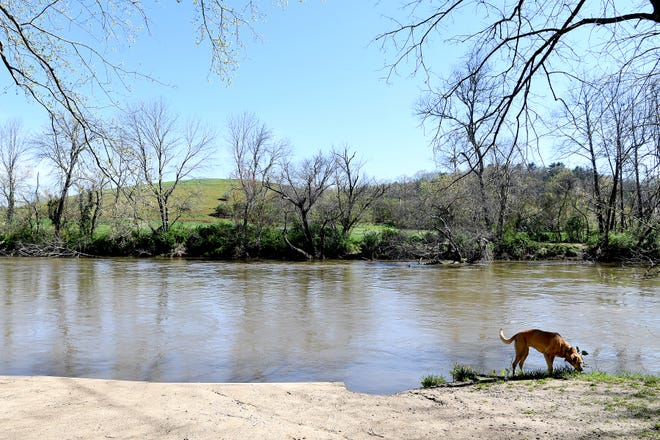 French Broad Riverkeeper, Hartwell Carson's dog, Junebug, sniffs the grass next to the French Broad River at Hominy Creek River Park as he arrives to take a water sample on April 10, 2019.