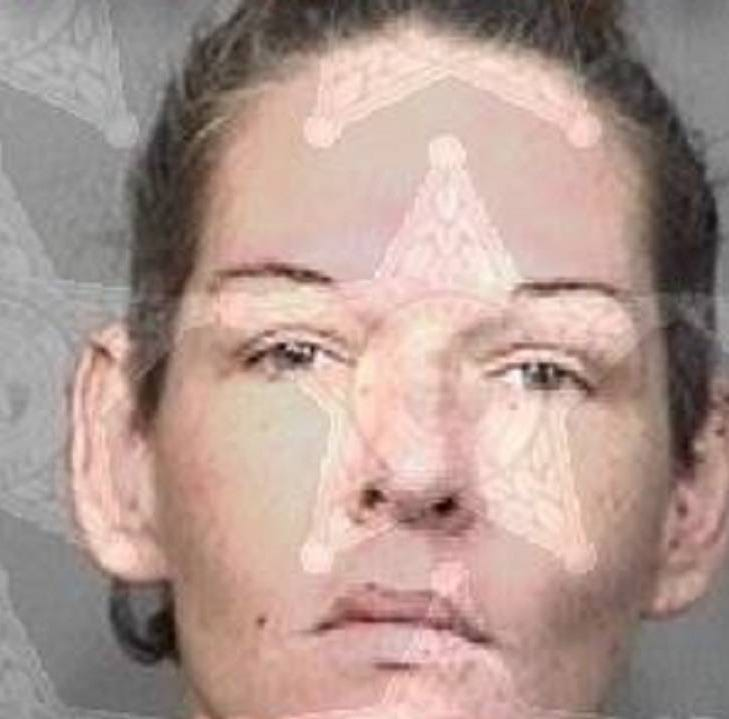 Naked boy found wandering Palm Bay neighborhood with pit bull, police say