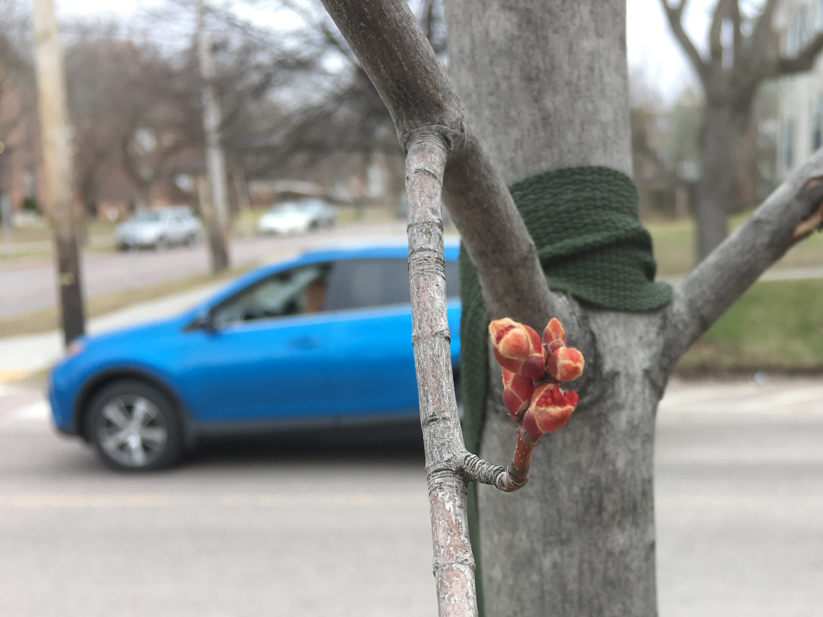 A sapling's bud adds color at the intersection of Willard and College streets in Burlington on Sunday, April 14, 2019.