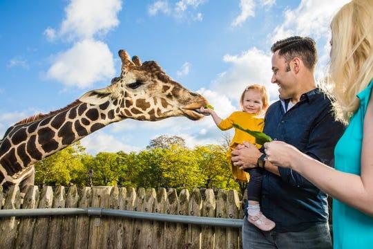 Giraffe Encounter.