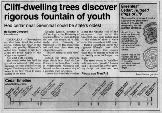 A 1997 story from the Green Bay Press-Gazette details scientist Douglas Larson's discovery of a 1,290-year-old tree in Greenleaf, Wisconsin.