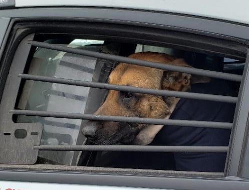 Green Bay police dog Pyro returns home from the hospital.