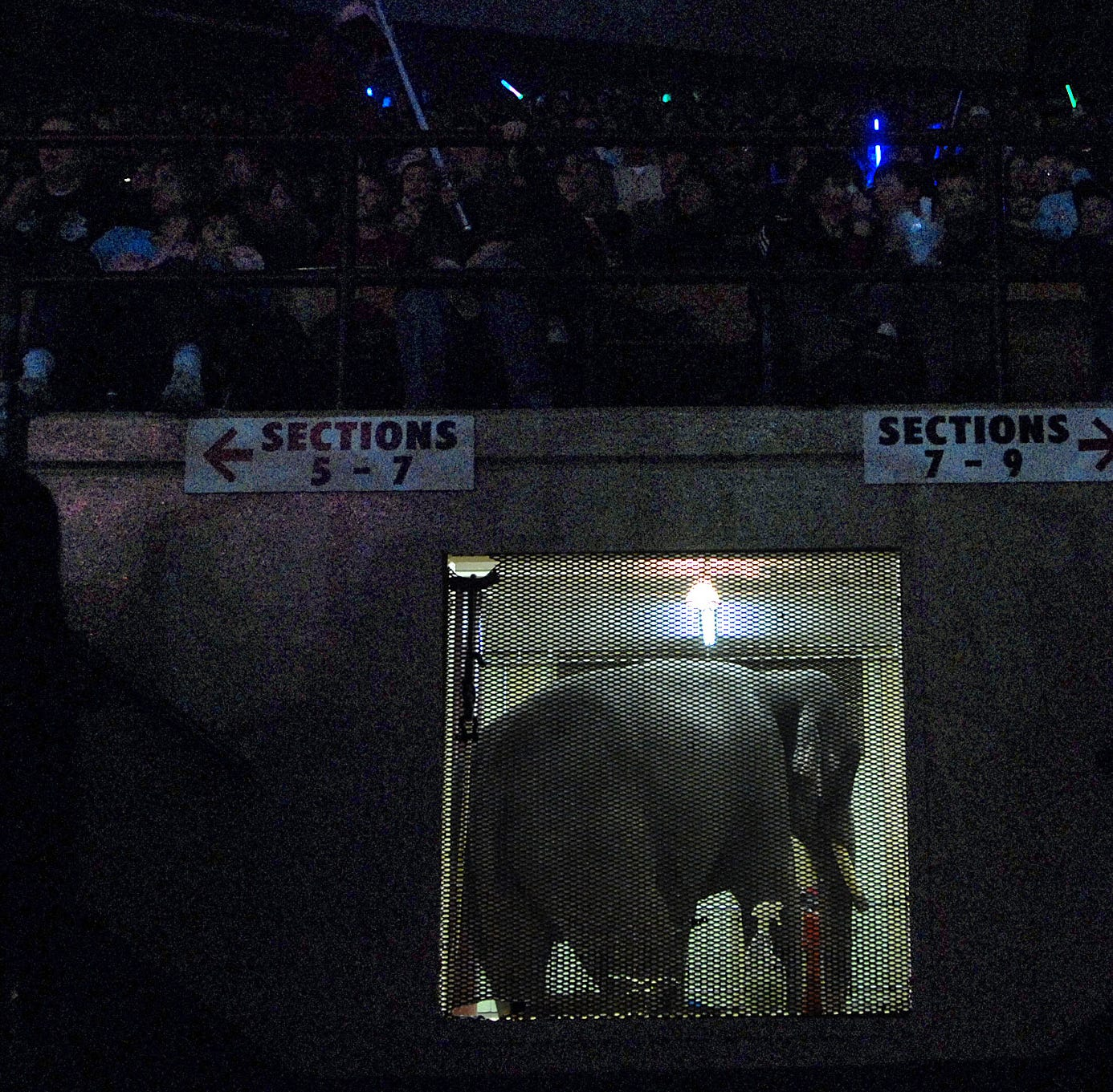 Tons of fun: In 1985, circus elephants devoured 900 Packers pompoms, sticks and all
