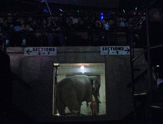 A circus elephant is held beneath the stands Sunday as visitors watch activity in the center ring during the 2008 Beja Shrine Circus at Brown County Veterans Memorial Arena.