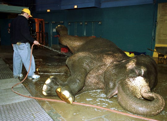 Tory, a 34-year-old elephant, gets a bath  from Brett Carden in 2000 at Brown County Veterans Memorial Arena.
