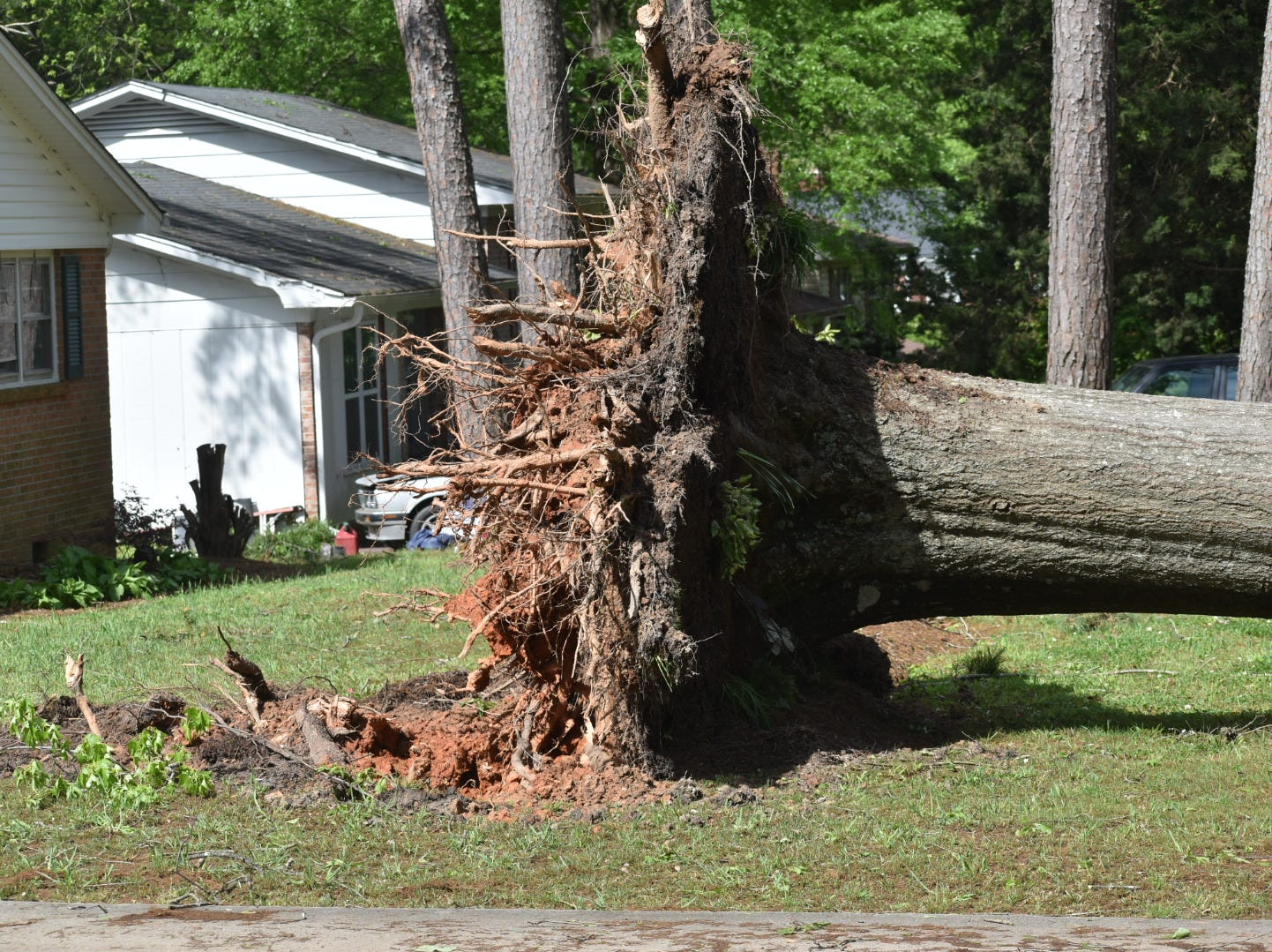 An uprooted tree caused by storms in Simpsonville.