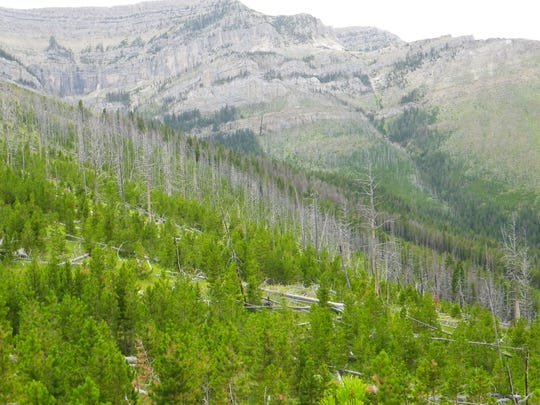 Dead trees and thick regrowth of lodgepole pine dominate the landscape north of Steamboat Mountain. The Elk Smith Project is meant to reduce fuel loading that could lead to severe wildfires.