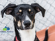 Meet Officer Beans! She's a 7-month-old hound mix. Beans loves to play as any growing puppy does. She would benefit in a home with another dog that could be a confidence buddy. She's hoping you will drop by and meet her at 6717 Kingston Pike, Knoxville. Info: HumaneSocietyTennessee.org!