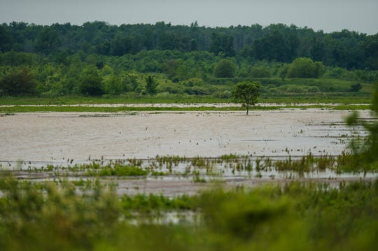 A wetland at Limberlost State Historic Site.