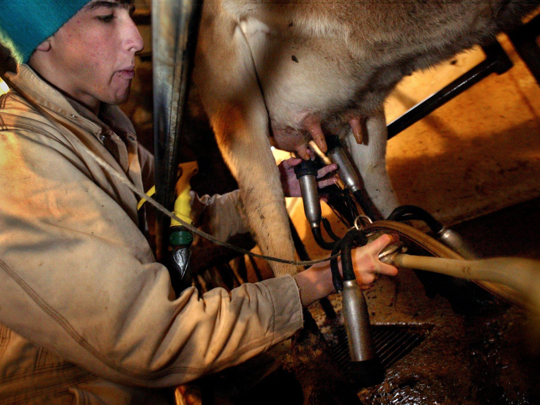Kyle Nichols, 17, milks one of the dairy cows on his family's farm in Nolensville in 2004.