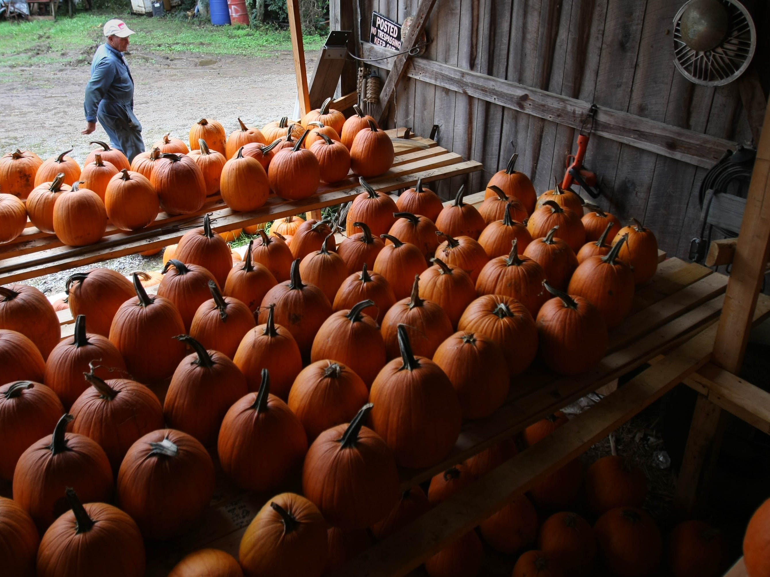 Johnny Hicklen of Hicklen Farms in Nolensville walks by one of his barns  where he stores his pumpkins.