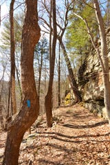 The Tanbark Loop meanders along  a series of switchbacks leading up to the cliff face.