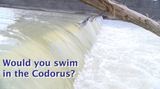 We asked a local riverkeeper and York City Mayor Michael Helfrich if they would swim, drink or eat a fish from the water of the Codorus Creek.