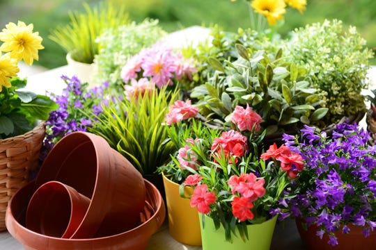 The best potting soil for potted plants or trees depends on what you're planting.
