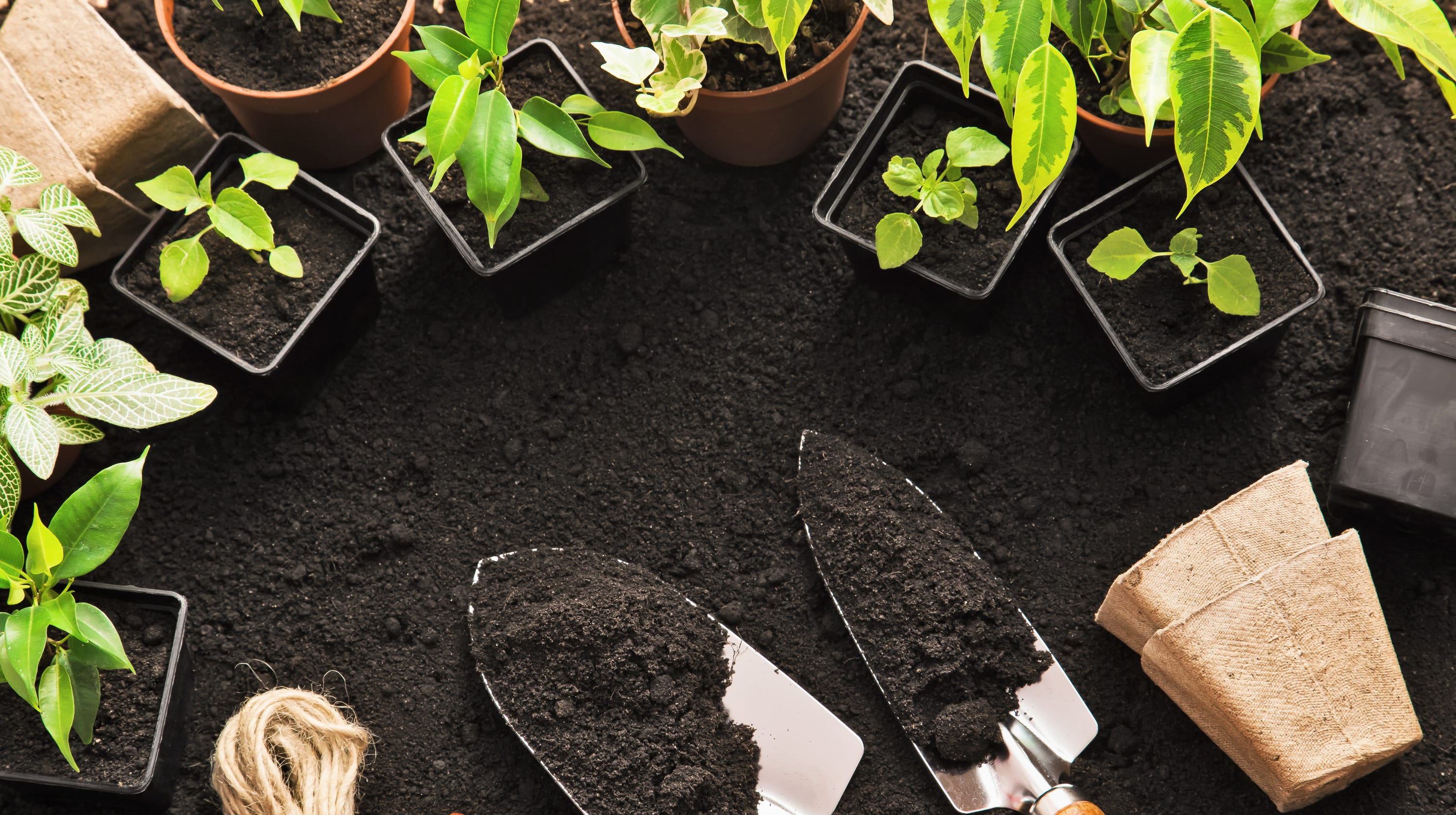 Growing vegetables? Here are some great resources for gardening greenhorns