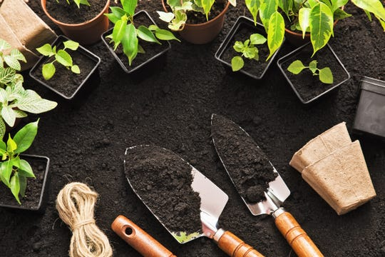 Gardening tools and plants on land.