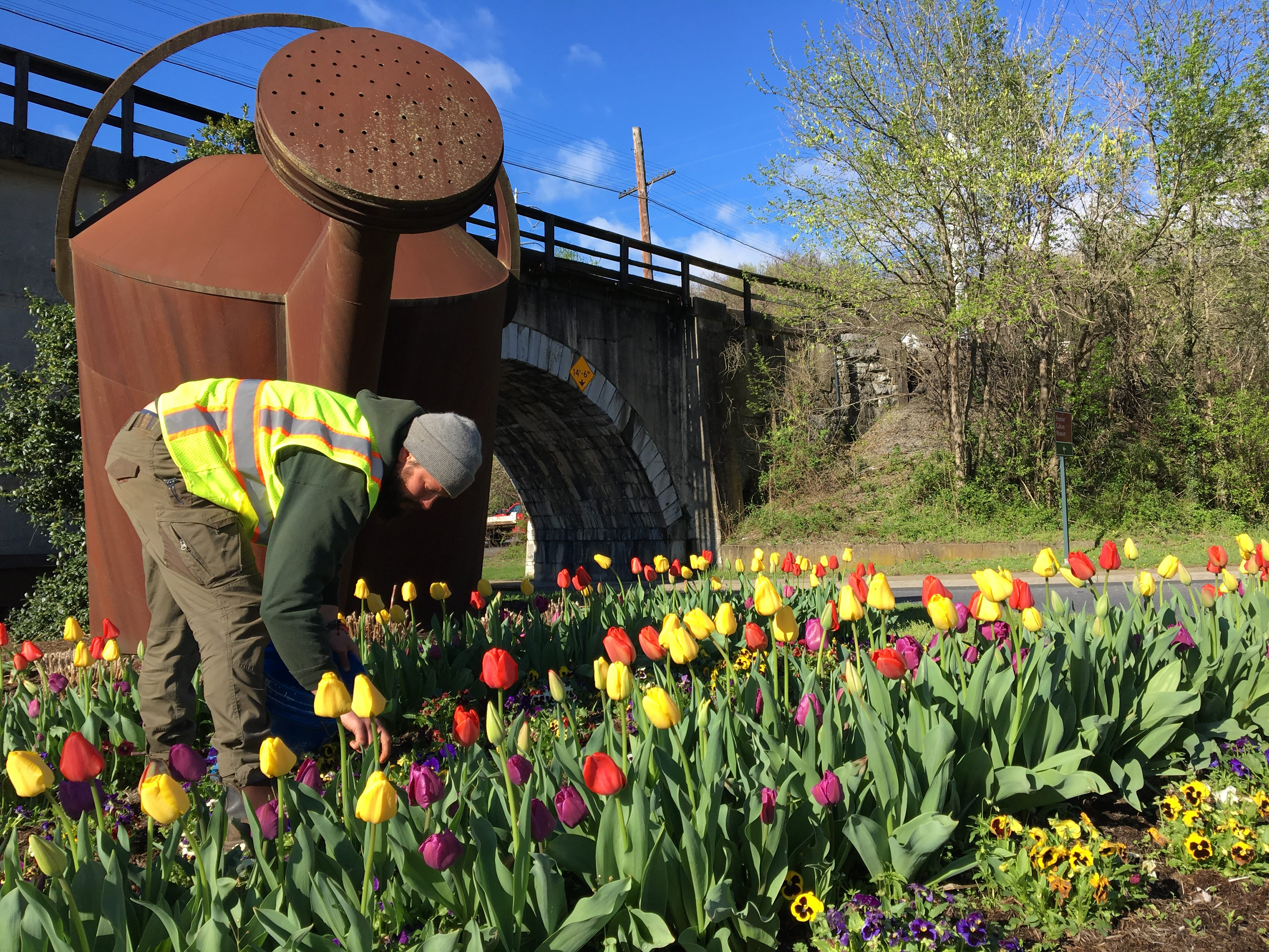 Horticulturist Ben Hastert leans down to pull weeds in between the tulips and pansies.