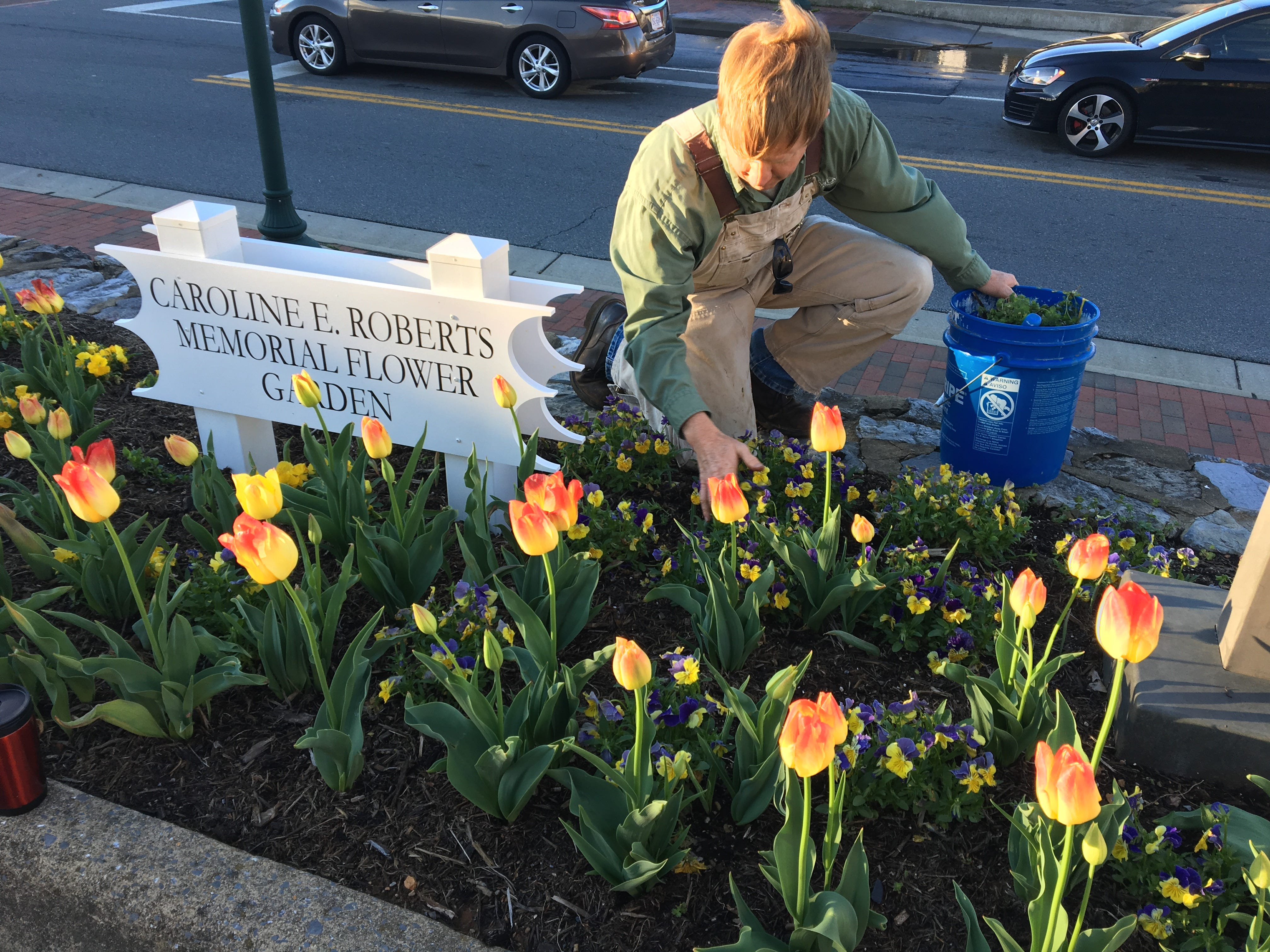 When families take pictures outside of the Staunton Public Library in front of the tulips,  Horticulturist Matthew Sensabaugh feels he's done his job well.