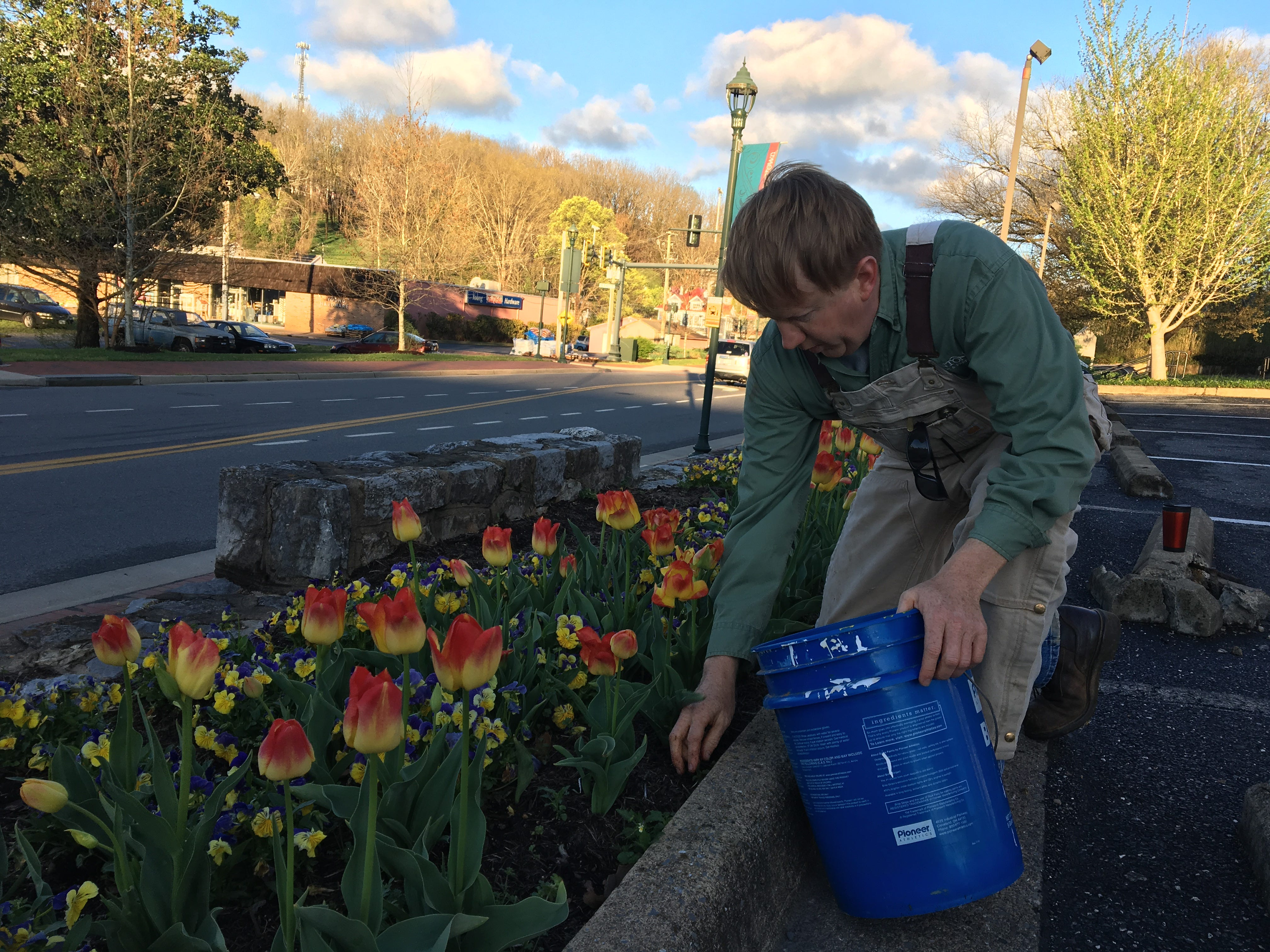 Horticulturist Matthew Sensabaugh tends to the flower bed in front of the Staunton Public Library.