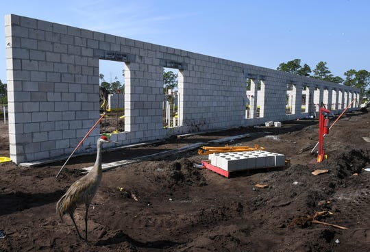 A Sandhill Crane walks by the wall of the south neighborhood of the Ardie R. Copas State Veterans' Nursing Home on Monday, April 15, 2019, as construction of the 120-bed facility in the western end of Southwest Tradition Parkway in Port St. Lucie continues. Each of the two neighborhoods will hold 60 beds, three-20 bed communities with a kitchen area and community living room and den.