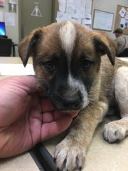 A puppy was found in a plastic bag by Tulare County sheriff's deputies on Monday.
