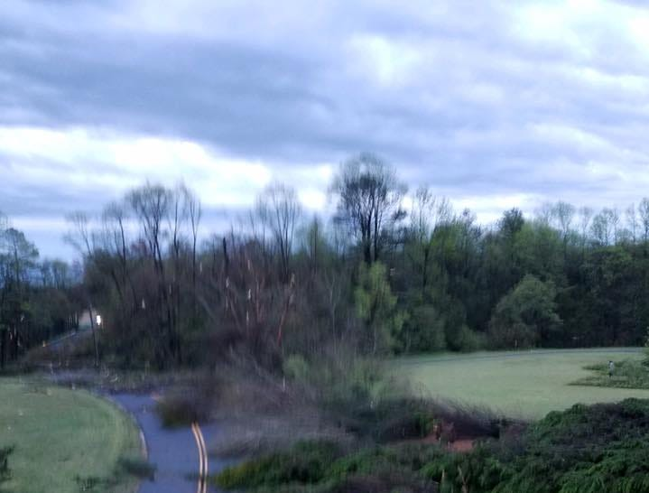 Delaware Electric Cooperative early Monday shared this image of downed trees near Seaford.