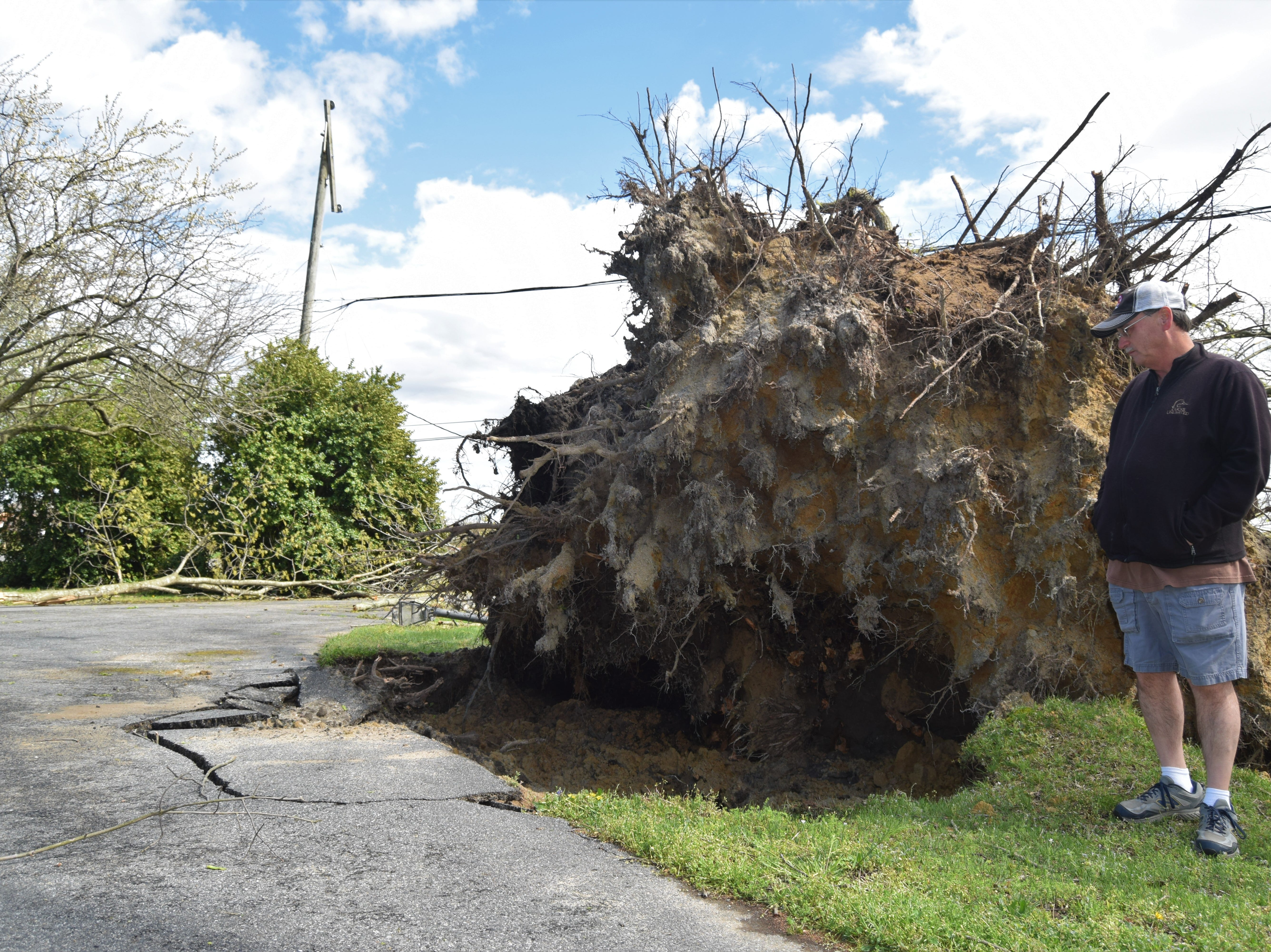 Scott Phillips looks at the aftermath of storm damage that uprooted this tree planted by his parents in the 1940s.