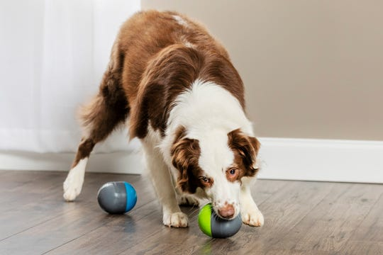 When a dog plays with one of the's Pet Safe Ricochet electronic toys,  a squeak is heard from the other toy. When the dog runs to the second toy, the sound bounces back to the first toy.