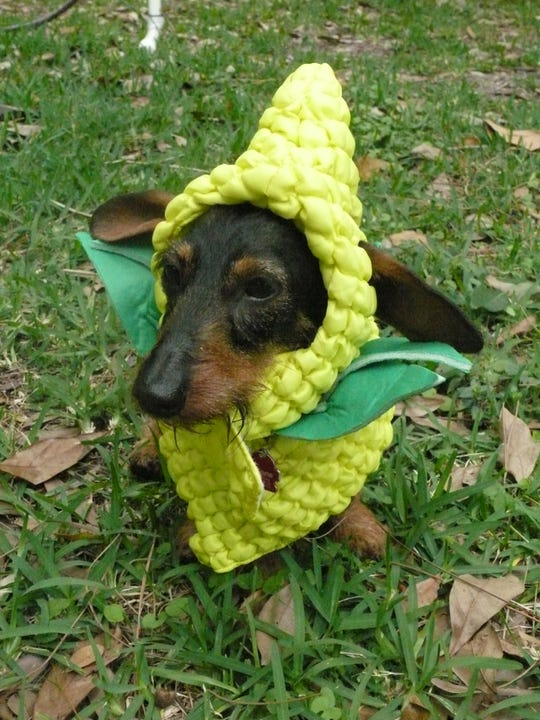 Canine influencer Vienna shows off a corn dog costume by Pet Krewe at the recent 2019 Global Pet Expo in Orlando.