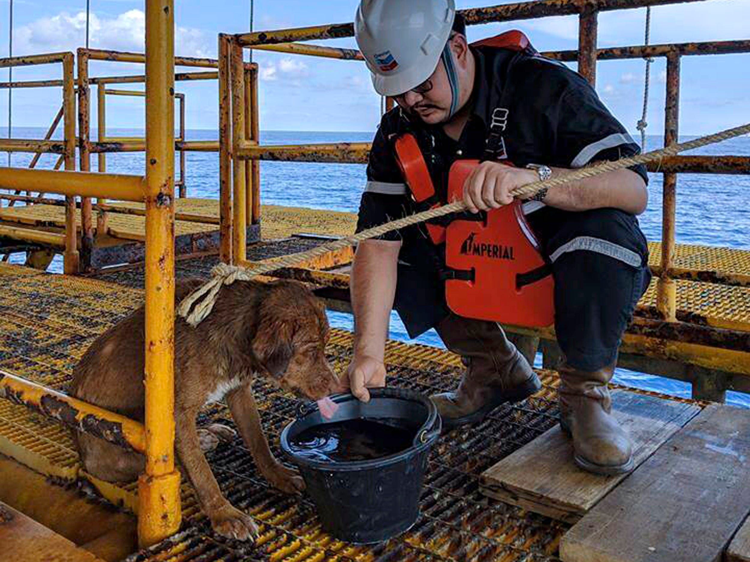 A dog is taken care an an oil rig after being rescued in the Gulf of Thailand. The dog, found swimming more than 135 miles from shore by an oil rig crew in the Gulf of Thailand, was returned safely to land. Vitisak Payalaw, stationed on the rig belonging to Chevron Thailand Exploration and Production, said on his Facebook page the dog was glimpsed Friday swimming toward the platform, where it got a grip on a pole at sea level.