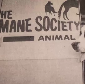 From a gravel lot to sunlit shelter, Larimer Humane Society looks back on 50 years