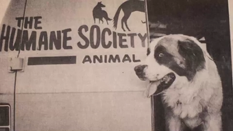 Peek into the past of the Larimer Humane Society, which started with a group of concerned citizens in the 1960s.